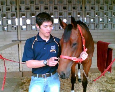 馬とシロクマックスの写真