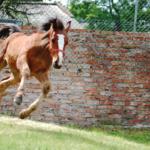 サクソンウォリアーから学ぶ日本産馬の海外評価の上げ方
